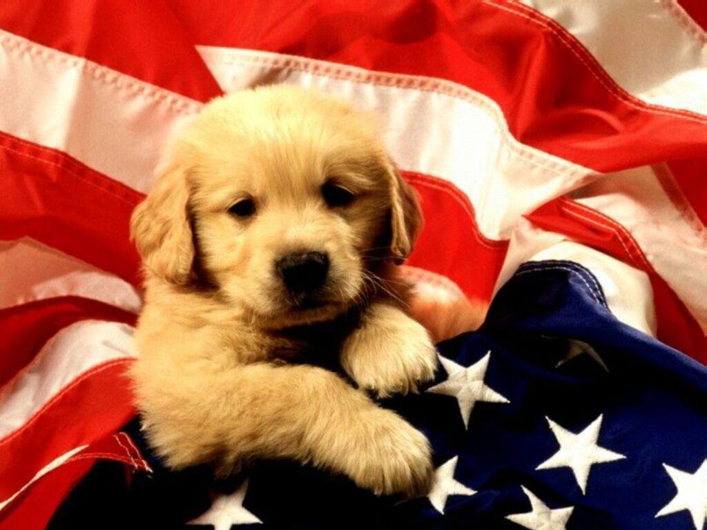 Fonds ecran chiens page 6 for Fond ecran chiot